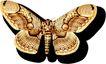 蝴蝶百科0266,蝴蝶百科,动物,