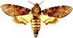 蝴蝶百科0268,蝴蝶百科,动物,