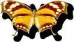 蝴蝶百科0272,蝴蝶百科,动物,