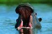 野生图影0049,野生图影,动物,
