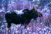 野生图影0056,野生图影,动物,
