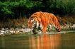 野生图影0059,野生图影,动物,