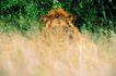 野生图影0070,野生图影,动物,草丛