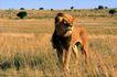 野生图影0071,野生图影,动物,猛兽