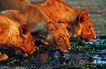 野生图影0072,野生图影,动物,