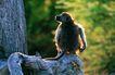 野生图影0092,野生图影,动物,蜢生动物 树杆