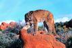 野生图影0093,野生图影,动物,凶猛动物 猛虎