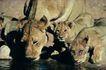 非洲动物0001,非洲动物,动物,