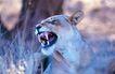 非洲动物0002,非洲动物,动物,