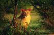 非洲动物0004,非洲动物,动物,