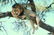 非洲动物0006,非洲动物,动物,