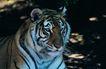 非洲动物0010,非洲动物,动物,