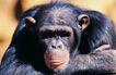 非洲动物0011,非洲动物,动物,