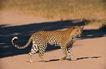 非洲动物0012,非洲动物,动物,