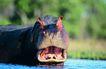 非洲动物0016,非洲动物,动物,