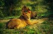 非洲动物0018,非洲动物,动物,