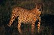 非洲动物0020,非洲动物,动物,