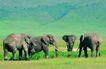 非洲动物0025,非洲动物,动物,几头大象