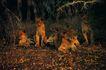 非洲动物0028,非洲动物,动物,