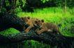 非洲动物0029,非洲动物,动物,