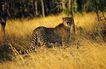 非洲动物0031,非洲动物,动物,