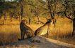 非洲动物0032,非洲动物,动物,