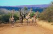 非洲动物0033,非洲动物,动物,
