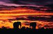 非洲动物0034,非洲动物,动物,