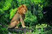 非洲动物0036,非洲动物,动物,