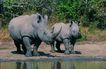 非洲动物0039,非洲动物,动物,