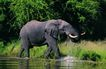 非洲动物0045,非洲动物,动物,