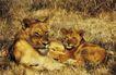 非洲动物0047,非洲动物,动物,