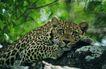 非洲动物0048,非洲动物,动物,