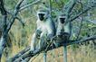 非洲动物0049,非洲动物,动物,