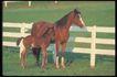 马和鹿0112,马和鹿,动物,