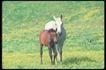 马和鹿0113,马和鹿,动物,