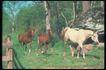 马和鹿0114,马和鹿,动物,