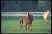 马和鹿0116,马和鹿,动物,