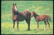 马和鹿0118,马和鹿,动物,