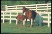 马和鹿0119,马和鹿,动物,