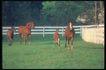 马和鹿0123,马和鹿,动物,