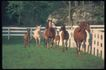 马和鹿0124,马和鹿,动物,
