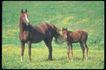 马和鹿0127,马和鹿,动物,