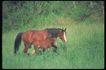 马和鹿0128,马和鹿,动物,