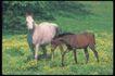 马和鹿0130,马和鹿,动物,