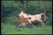 马和鹿0131,马和鹿,动物,