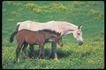 马和鹿0133,马和鹿,动物,