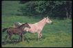 马和鹿0134,马和鹿,动物,