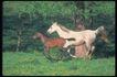 马和鹿0135,马和鹿,动物,
