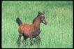 马和鹿0137,马和鹿,动物,